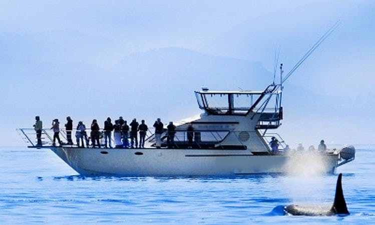 Whale Watching Tours in Southern Vancouver Island