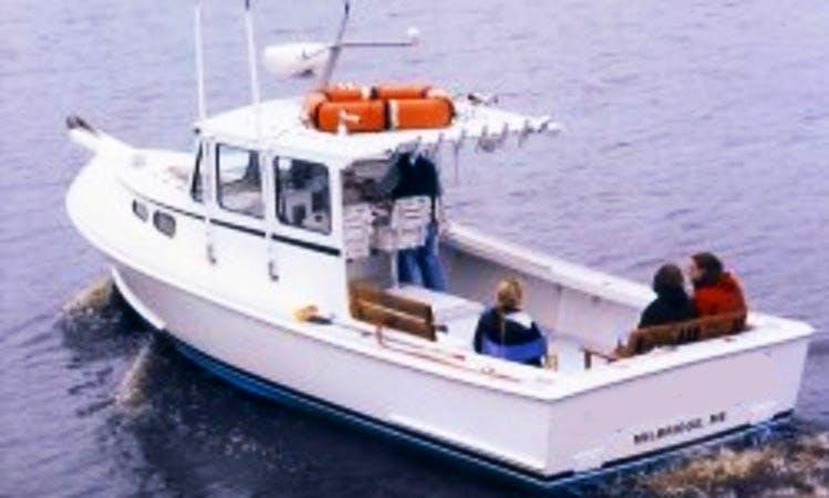 "28' ""Kandi Leigh"" Whale Watching Cruises in Harrington, Maine"