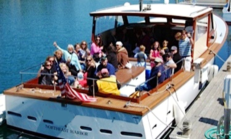 Wildlife Tour on a 42' Trawler Charter in Mt Desert, Maine
