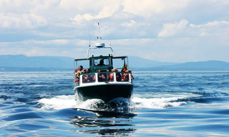 Observe Killer Whales and other Diverse Wildlife in Vancouver, Canada