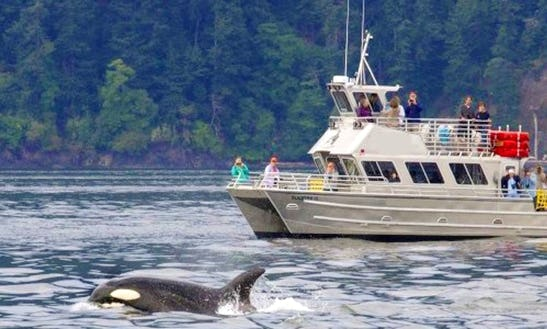 38' Tour Boat In Eastsound, Washington