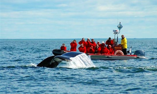 'otis Tryphon' Boat Whale Watching Excursions In Tadoussac
