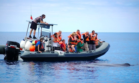 Boat Whale & Dolphin Watching Trips In Açores