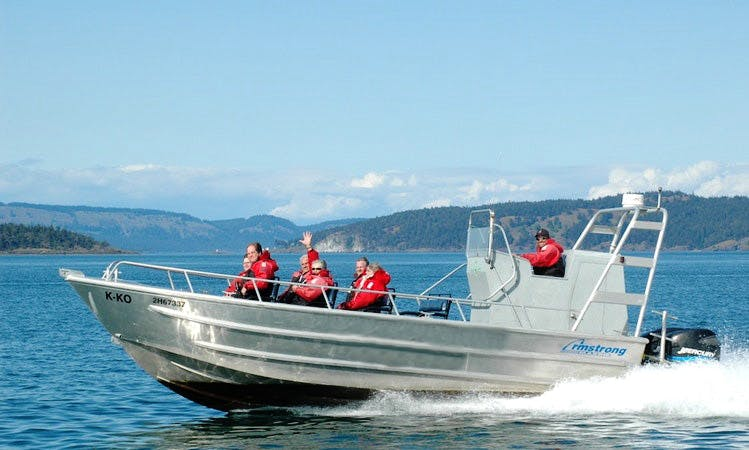 Whale Watching Tour in Sidney, BC