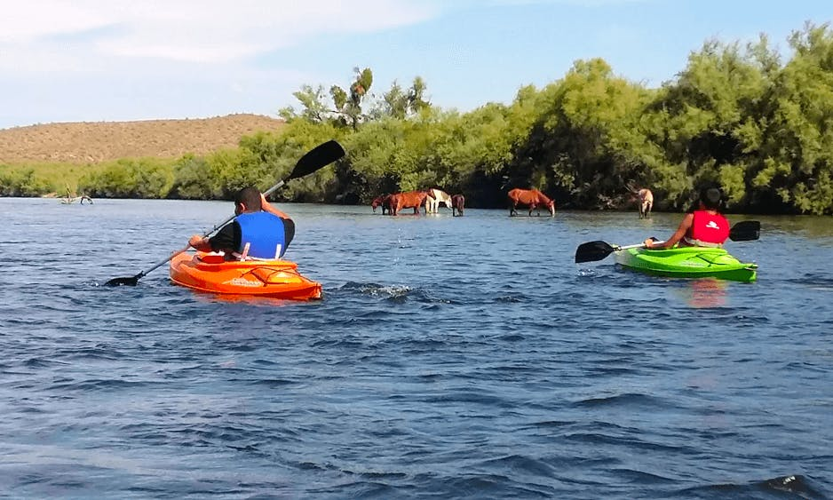 Paddle for a Day on a Kayak in Mesa, AZ