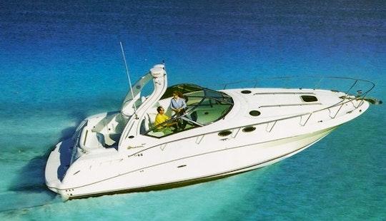 Sundancer Searay 35' Luxury Sport Yacht Charter In Cancún, Mexico