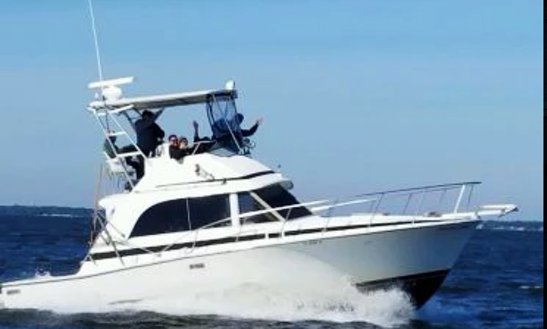 Fishing Charter On 35' Bertram Flybridge Yacht In Destin,florida