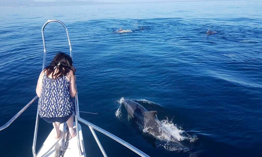 Private Dolphin Watching Tour in Marbella