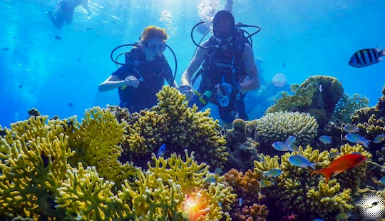 Dive With Seahorse, Whales, Dolphins And More In Eilat, Israel