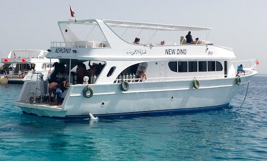 Experience Diving In Red Sea Governorate, Egypt