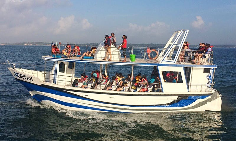 Have an amazing whale watching experience in North Western Province, Sri Lanka