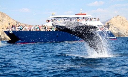 Inboard Propulsion Rental In Cabo San Lucas