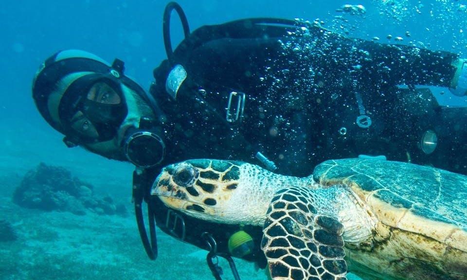 Adventurous Diving Experience in Eilat, Israel