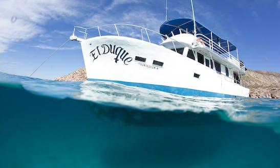 Private Boat Charter - Scuba, Snorkel, Kayak, Adventure
