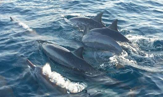 Best dolphin and whale watching experience in Buleleng, Bali