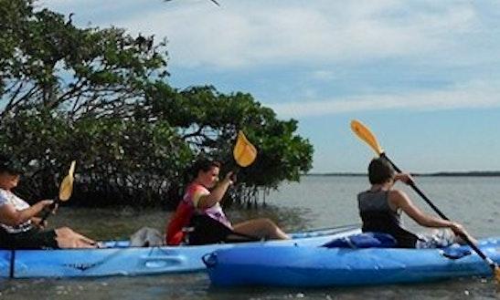 Estero Bay Kayak Tour In Bonita Springs, Florida!