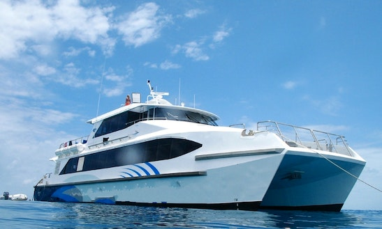 Silverswift Diving Cruise In Port Douglas