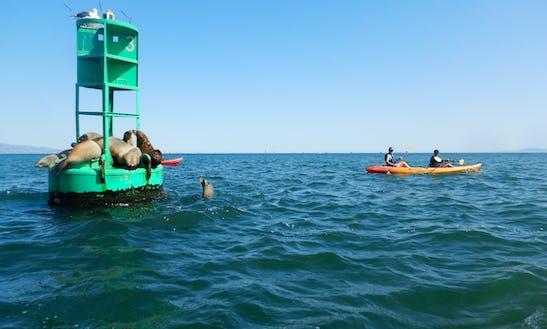 Guided Wildlife & History Kayaking Tours In Santa Barbara