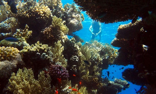 Diving Rental In South Sinai Governorate