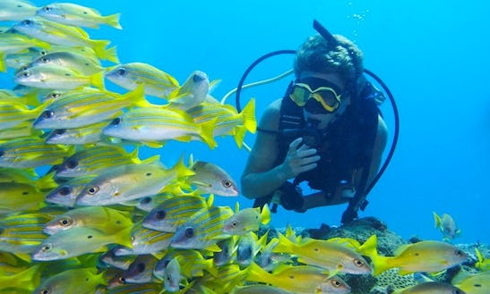 Diving Charter In Sodwana Bay South Africa