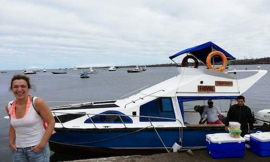 Diving Trip On Board A 31' Fioval Cuddy Cabin For 8 People In Puerto Ayora, Ecuador