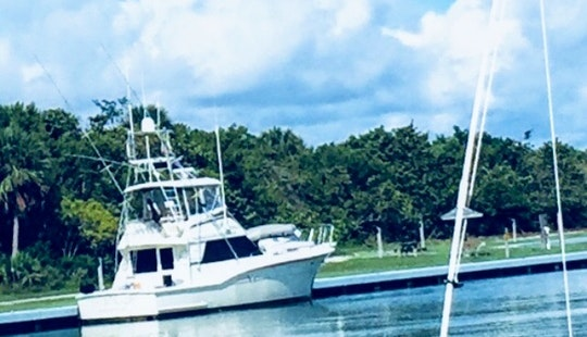 Fishing Trips And Cruising On 46' Hatteras Sportfisher Yacht In Miami