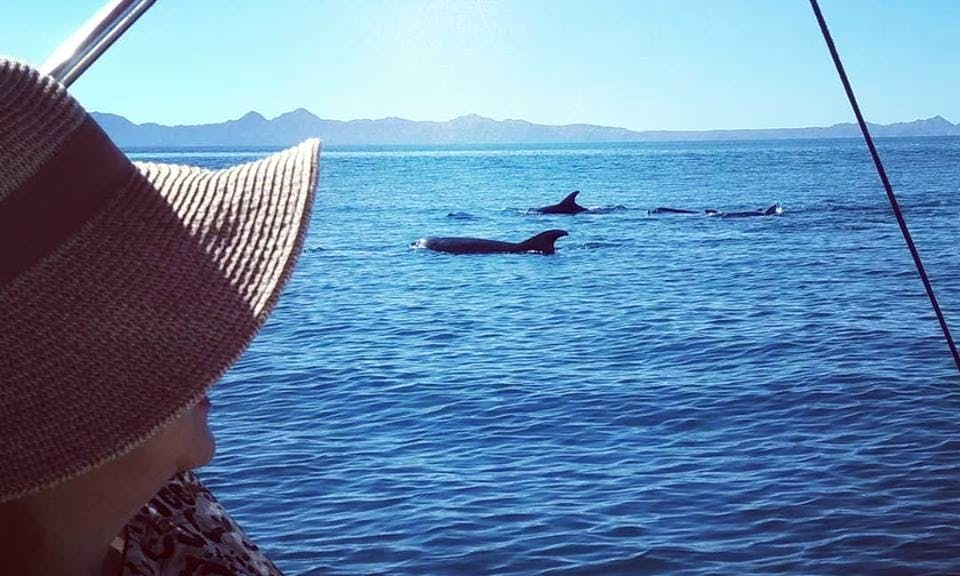 Whale Watching Trip in the Sea of Cortez