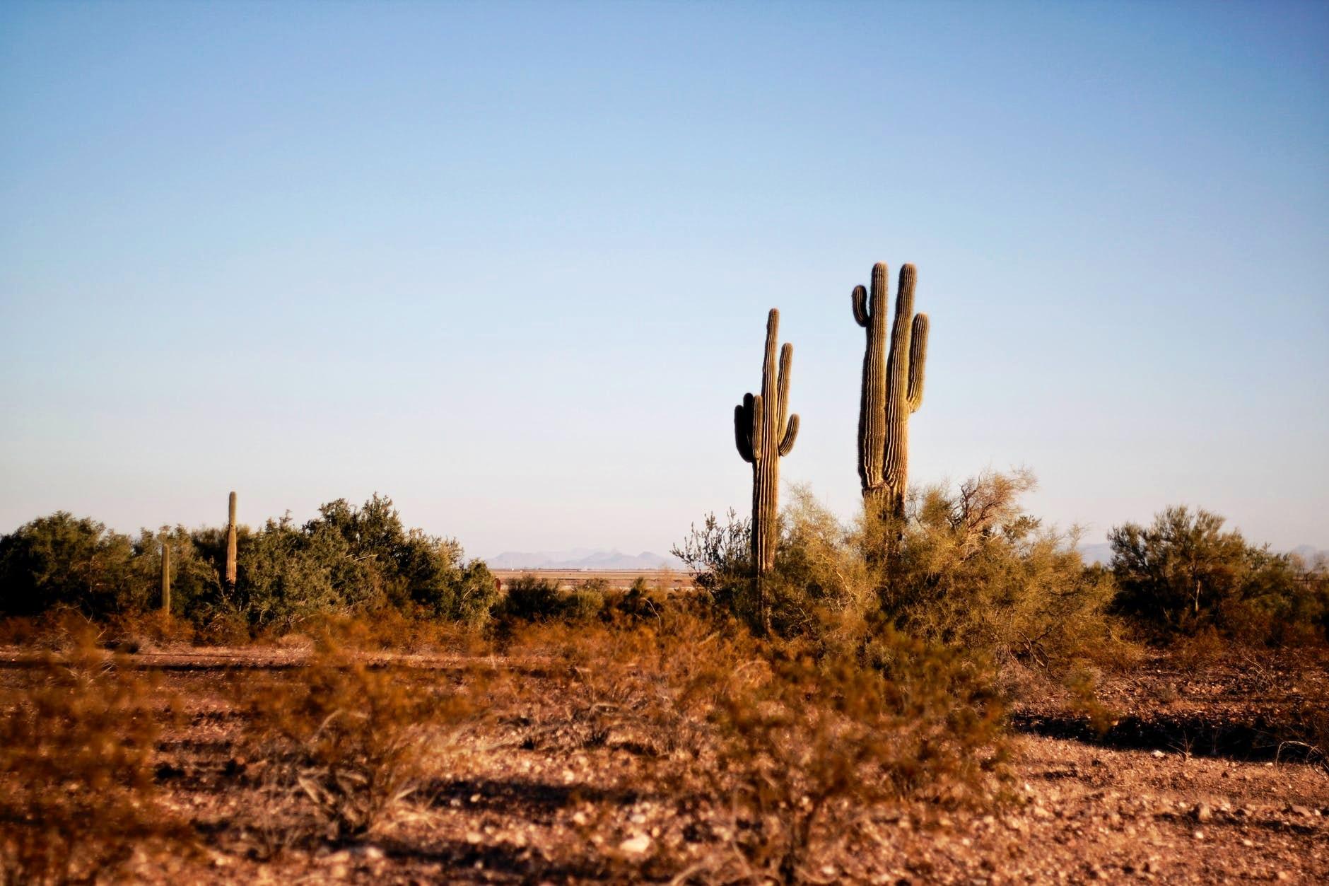 Texas Desert