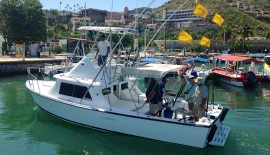 31 Ft Bertram Flybridge Fishing Boats Charter For 5 People In Cabo San Lucas, Mexico