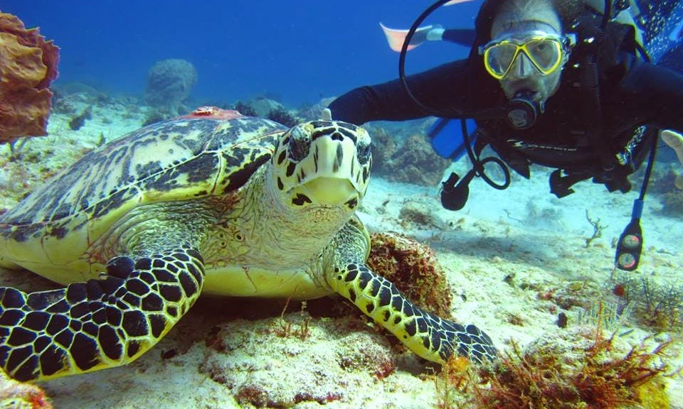 Scuba Lessons with PADI Certified Instuctors in Cancún, Mexico