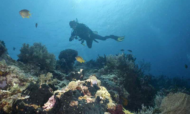 Discover Entire Bali While Diving With Us!