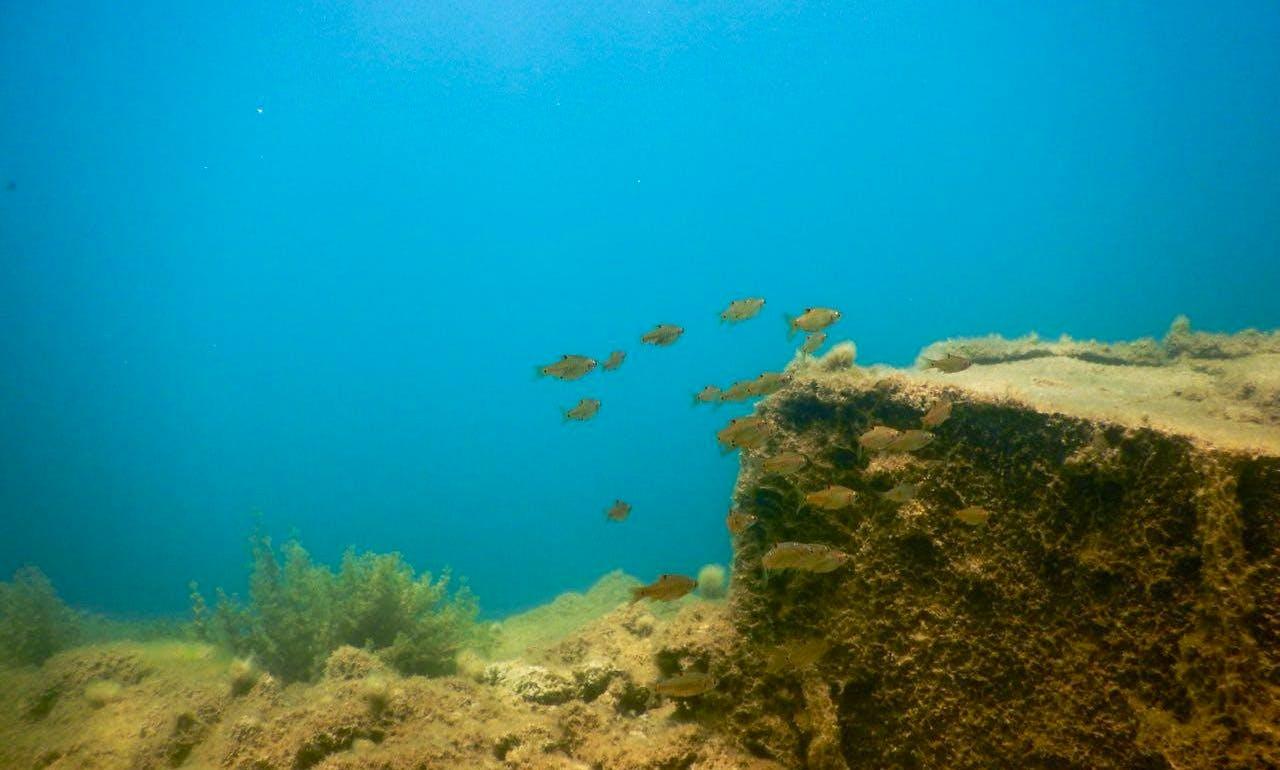 Discover Scuba Diving in Kalapettai, Pondicherry
