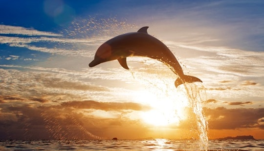 Ocean Safari Tours And Whale Watching!