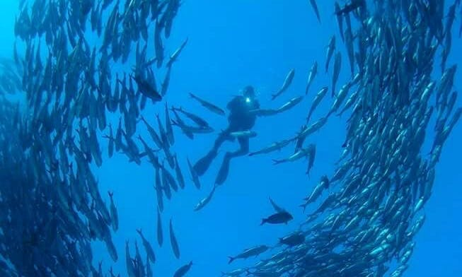 Enjoy An Underwater Experience Of A Life Time In Sumbawa, Indonesia!