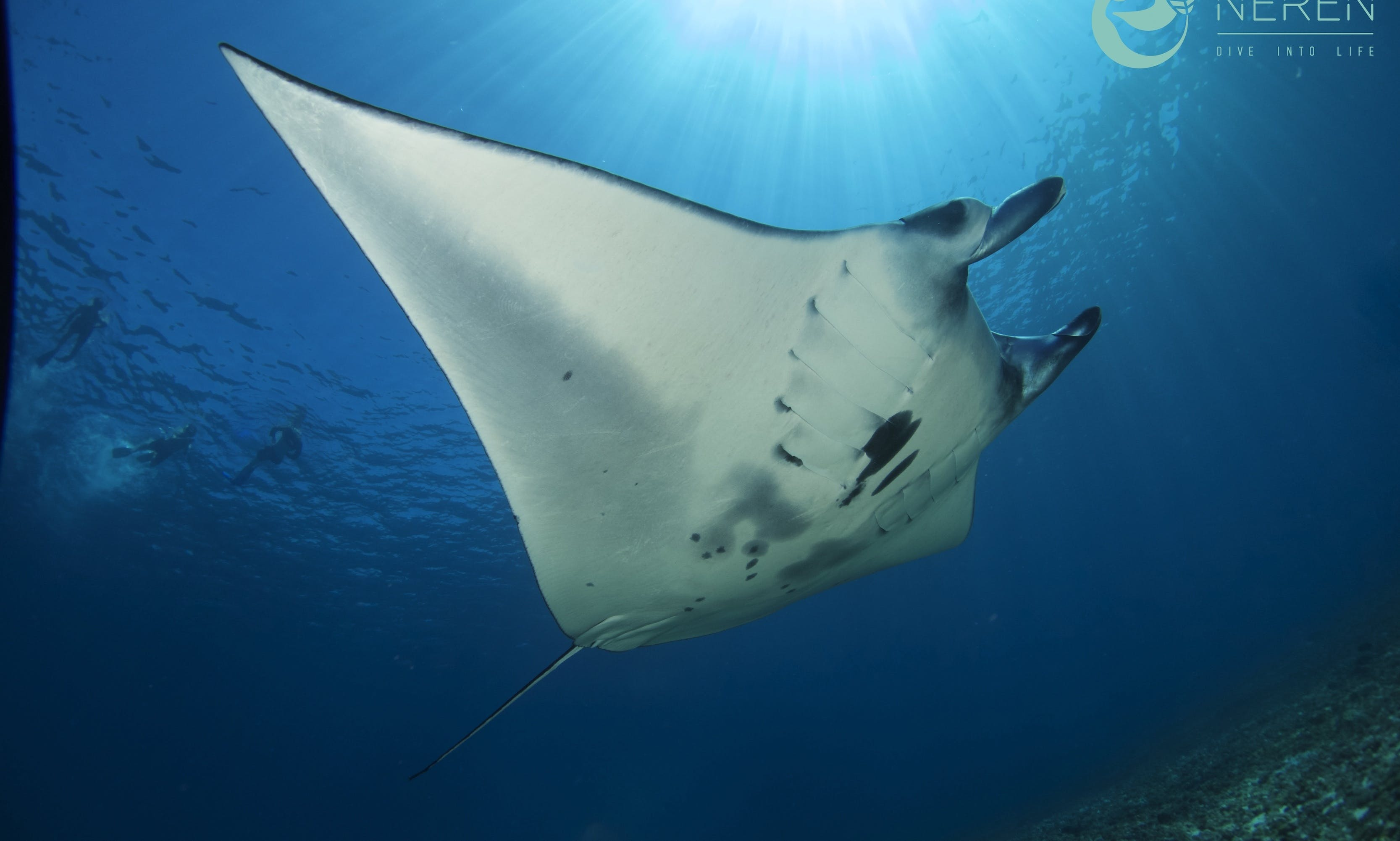 3 Days Fun Dive Trips to Komodo National Park in Indonesia