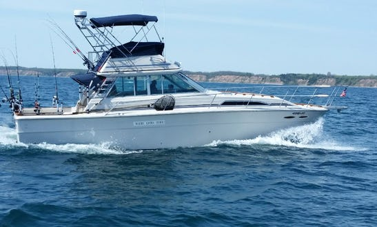 41 Ft Searay Hooked-up Ii Sport Fishing Charter In Port Washington