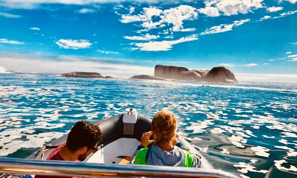 Marine Wildlife Boat Tour in Cape Town