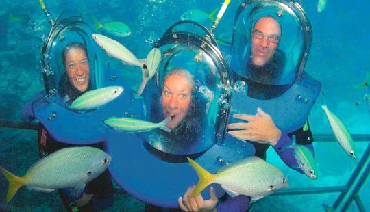 Ocean Walker Trips In Craiglie