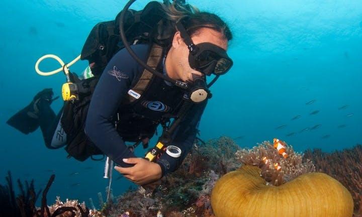 5 Days / 4 Nights Diving Tour in Bunaken, Indonesia