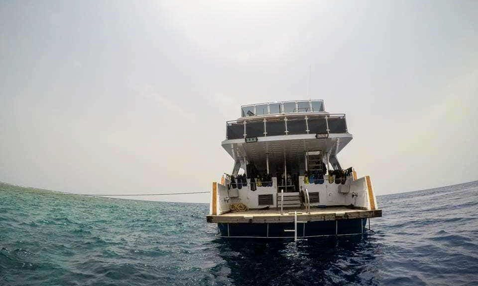 Boat Diving Trip  with Guides and Equipment in Red Sea Governorate