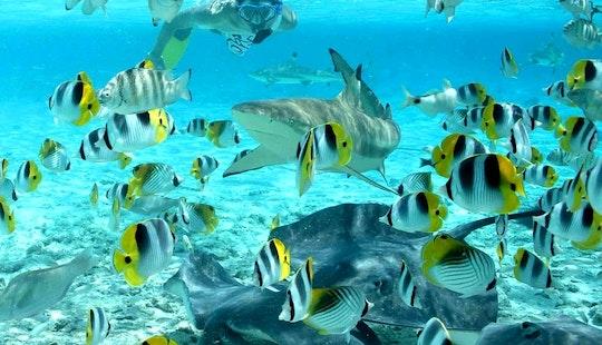 Shark & Ray, Coral Garden Snorkel Safari