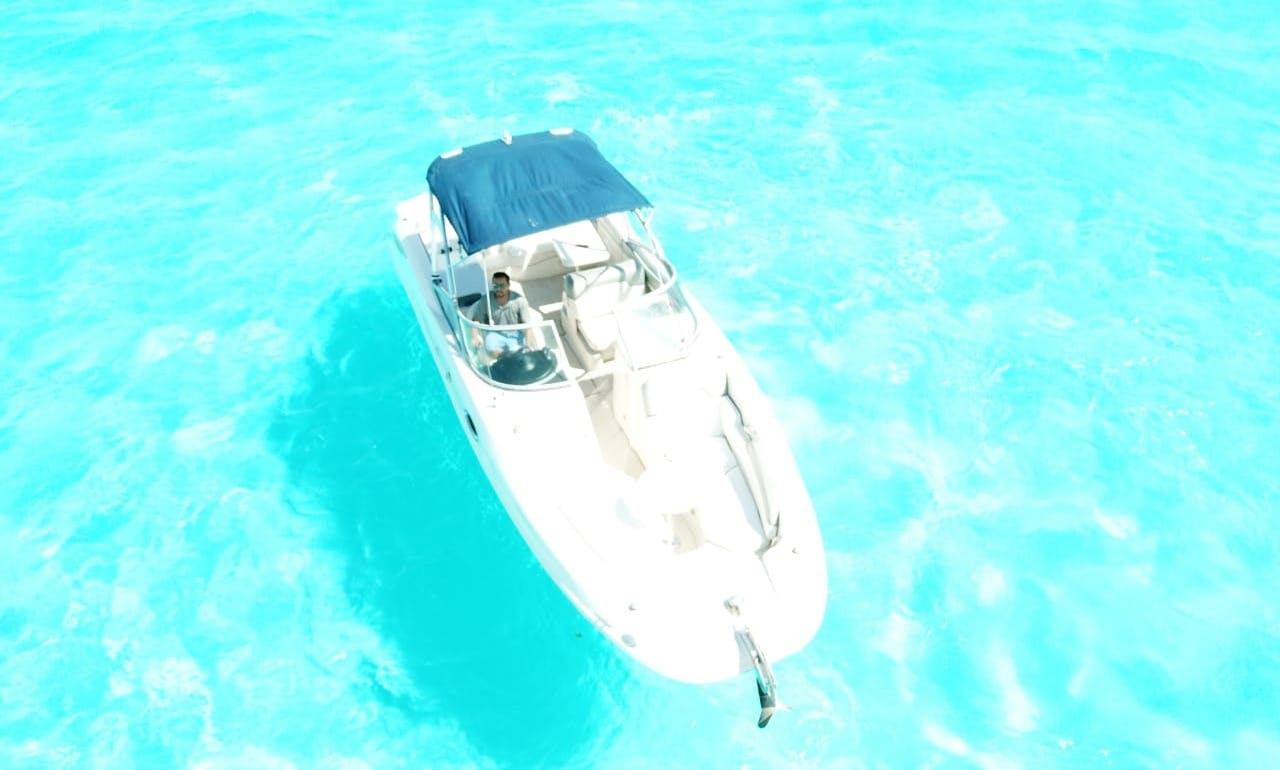 "29"" Sea Ray "" Day Tripper"""