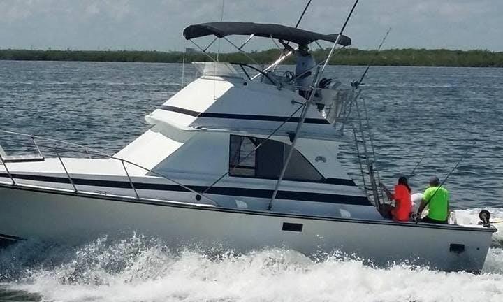 Cancún Fishing Charter for 6 people onboard 31' Bertram Sportfishing Yacht