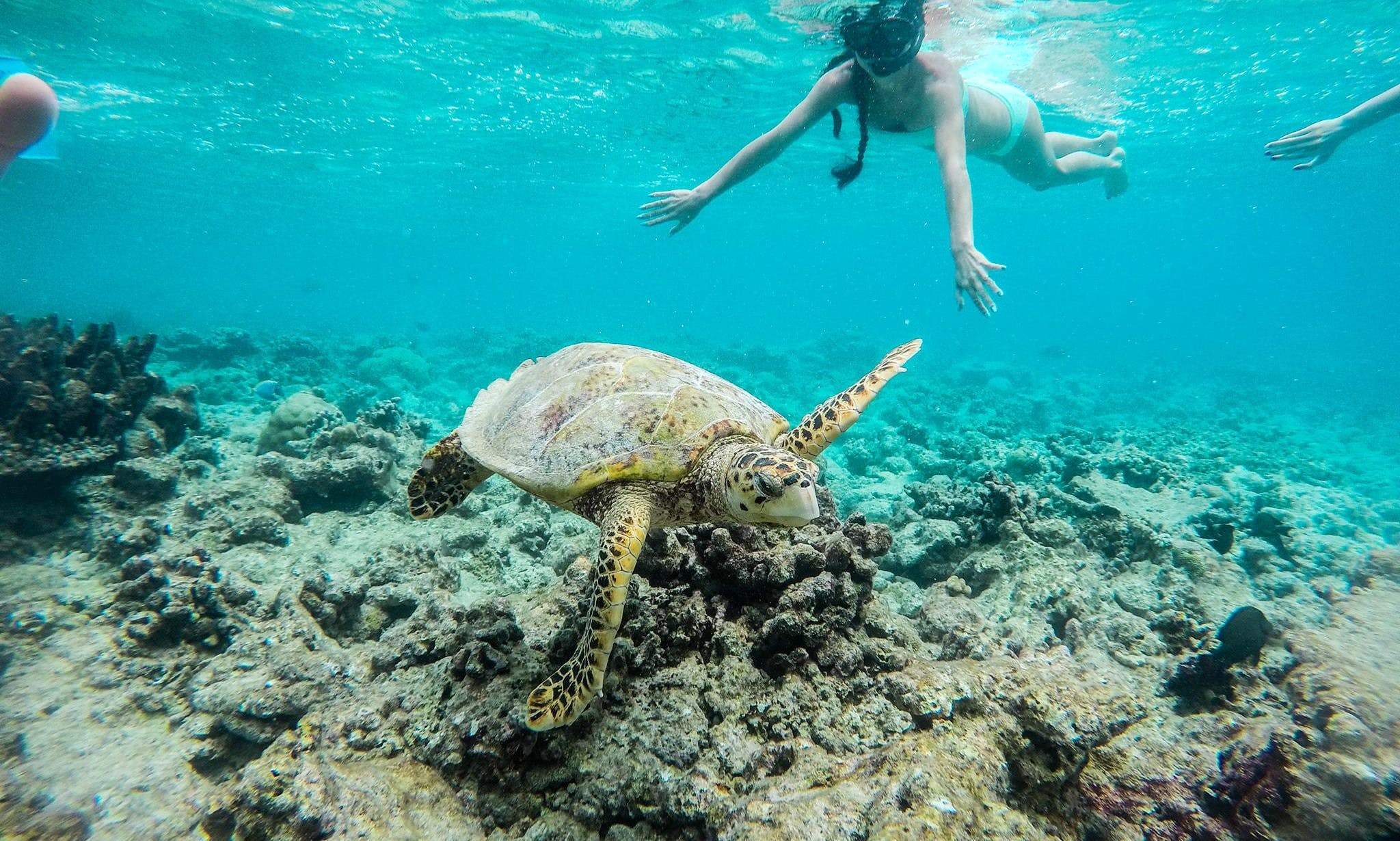 Adventure Snorkeling Excursions in Thoddoo, Maldives