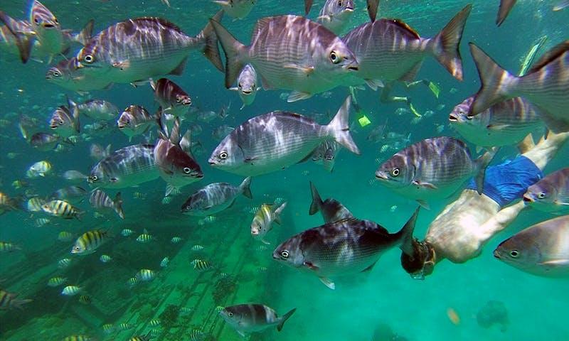 Underwater Wonders Adventure from Fitts Village, Barbados