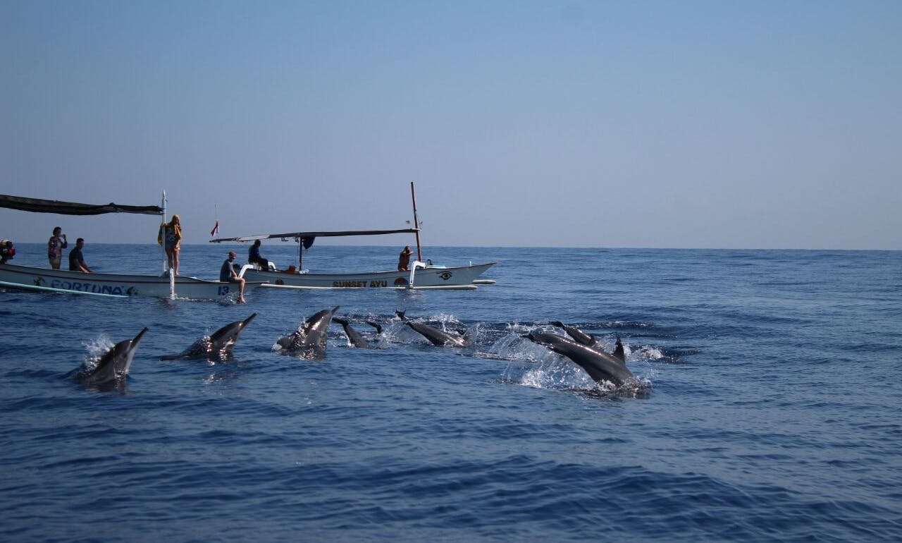 Dolphin and Sunrise Tour in Lovina, Bali