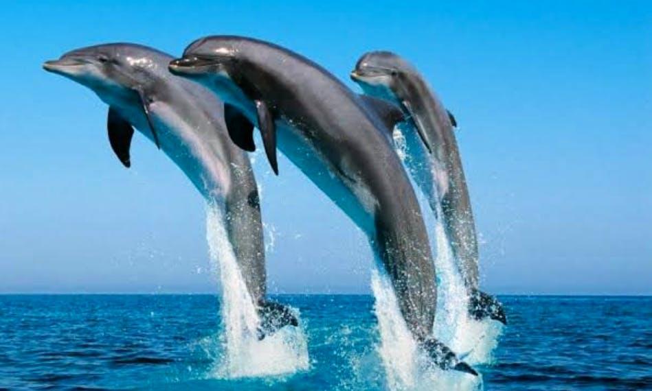Dolphin Tour in Pwani Mchangani