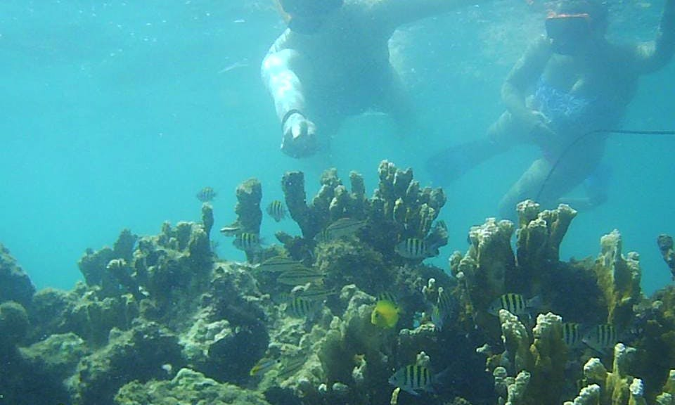 1 Hour Guided Snorkeling Tour in Isla Verde Nature Reserve