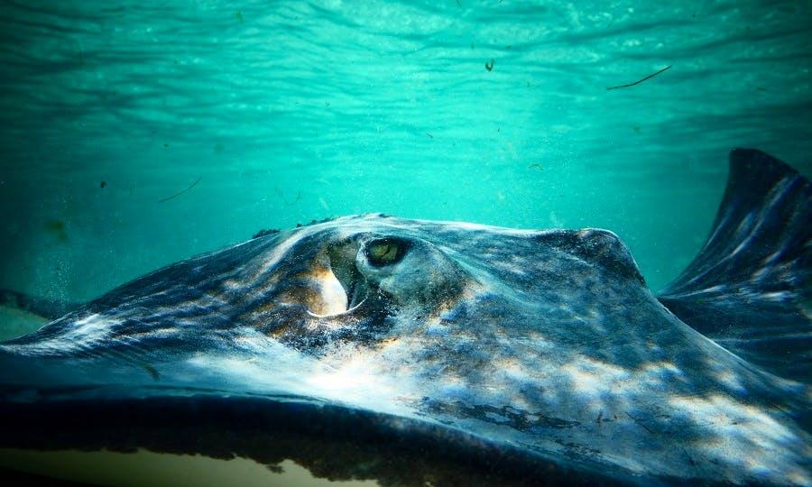 Stingray Adventure, Grand Turk, Turks & Caicos Islands
