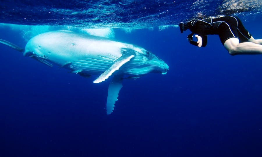 Private whale watching charter, Grand Turk, Turks & Caicos